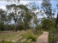 nsw_blue-mountains-012