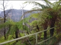 nsw_blue-mountains-142