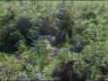 VIC-La-faune-en-vrac-23