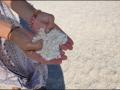 wa-shell-beach-091