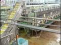 spc-fruits-factory-03