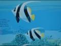 wa-turquoisebay-081