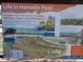 wa-hamelin-pool-stromatolites-011