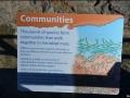 wa-hamelin-pool-stromatolites-071