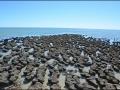 wa-hamelin-pool-stromatolites-111