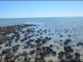 wa-hamelin-pool-stromatolites-161