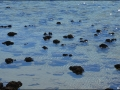wa-hamelin-pool-stromatolites-171