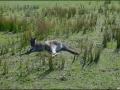 VIC-La-faune-en-vrac-25