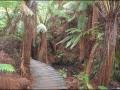 Maits Rest Rainforest Boardwalk