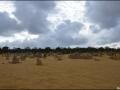 wa-pinnacles-desert-36
