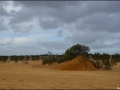 wa-pinnacles-desert-42