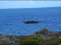 wa-rottnest-island-050