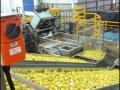 spc-fruits-factory-02